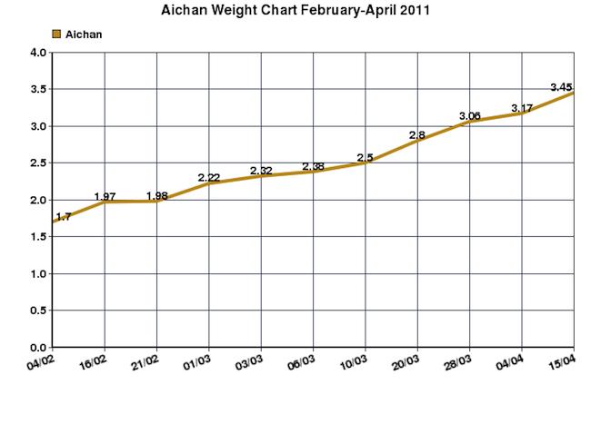 aichan Feb_April2011