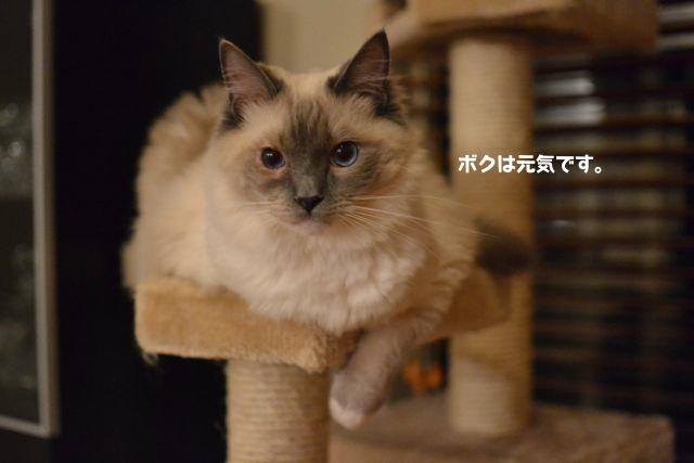 aichan07122011.jpg