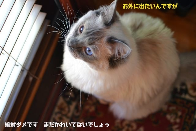 aichan_aftershampoo.jpg