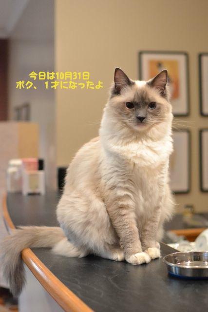 aichan_oneyear.jpg