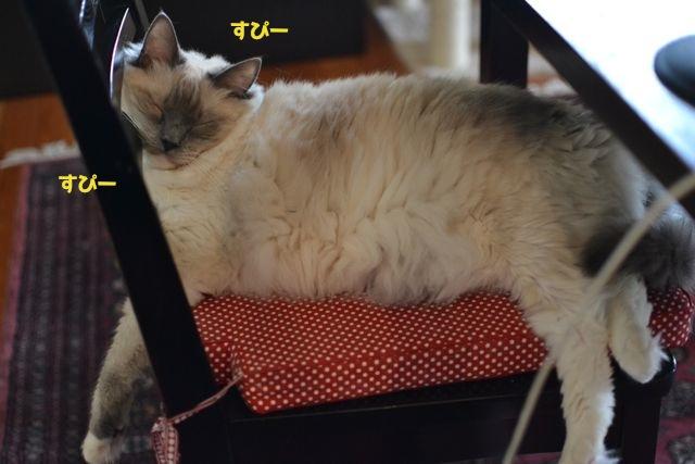aichan_sleepin_chair.jpg