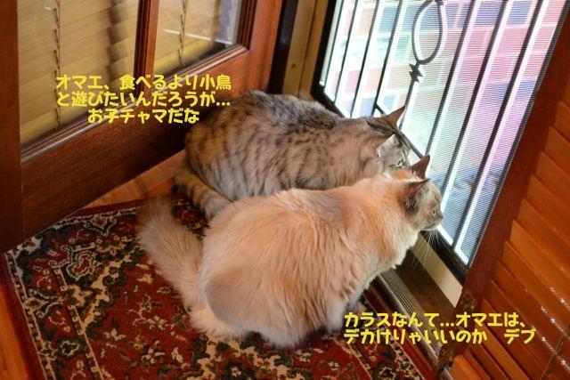 door01102011-2.jpg