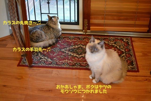 door01102011_02.jpg