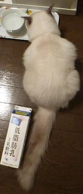 nanakun4.png