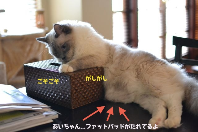 naughty_aichan.jpg