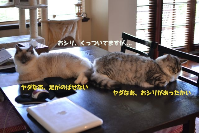 oshiri_dango.jpg