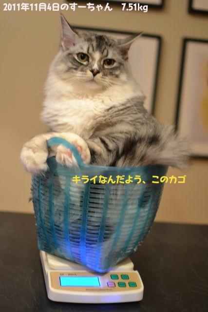 suchan04112011.jpg