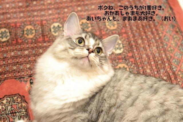 suchan16112011.jpg