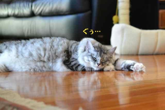 suchan_nap_floor.jpg