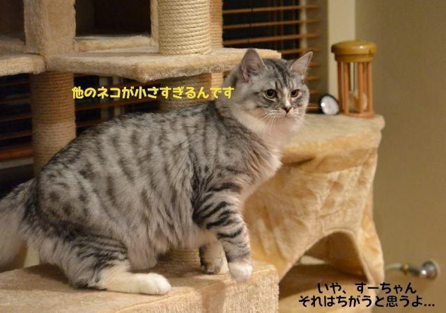 suchan_otonappoi.jpg