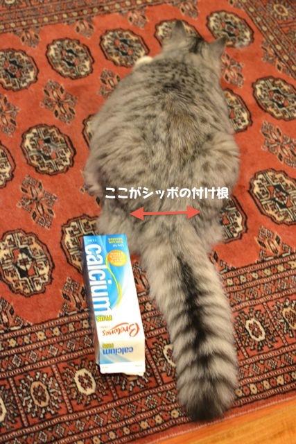 suchan_tail1.jpg
