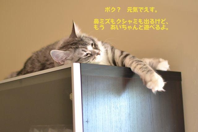 すーちゃん、上でのんびり