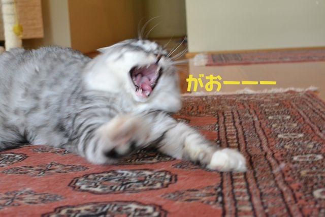 suchan_yawn2.jpg