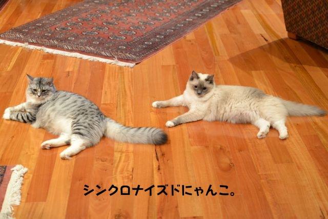 syncronisedcats.jpg