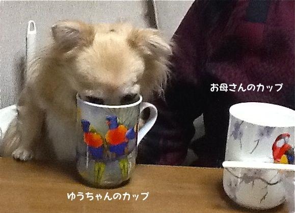 yuchan_cup.jpg