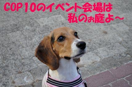 10101911-2.jpg