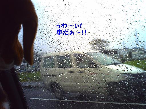 外 車を見る