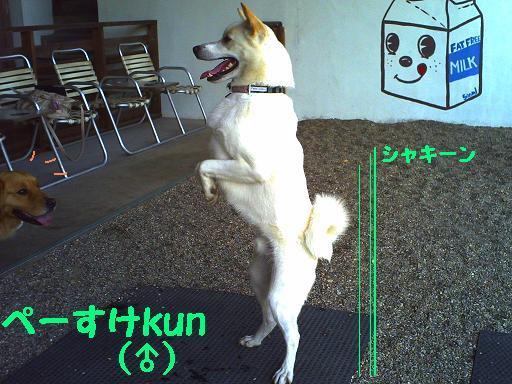 ピー助kun