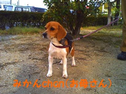 みかんchan