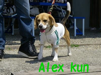 Alexkun