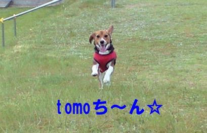 TOMO~
