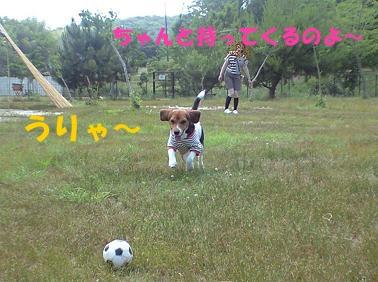 ボール遊び2