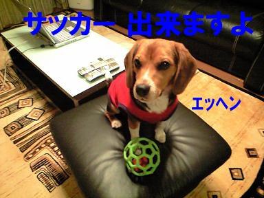 サッカー犬