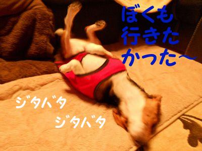 2010112405.jpg