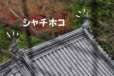 2010121106.jpg