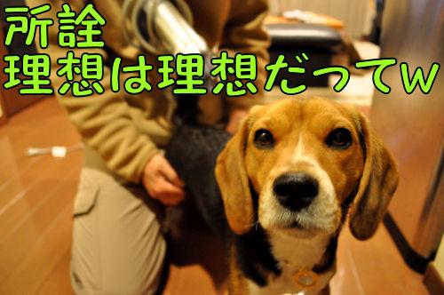2011031003.jpg