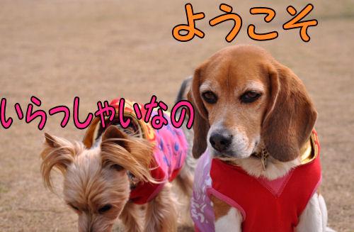 2011032201.jpg