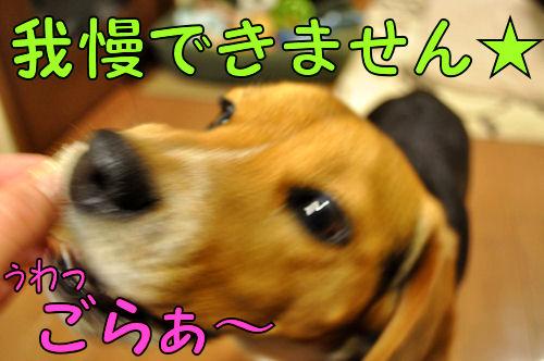 2011032605.jpg