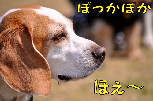 2011032905.jpg
