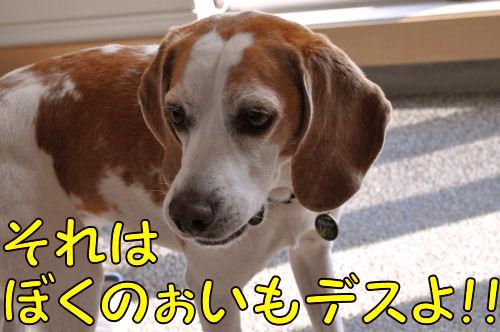 2011040105.jpg