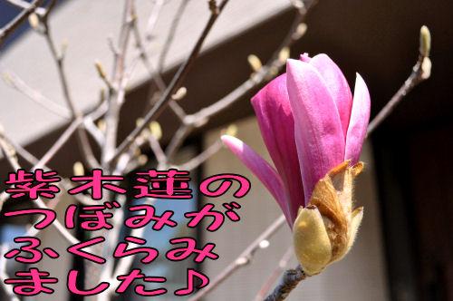 2011040601.jpg