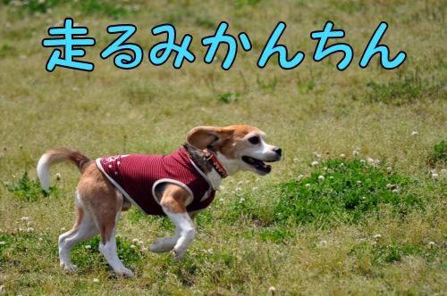 2011052521.jpg