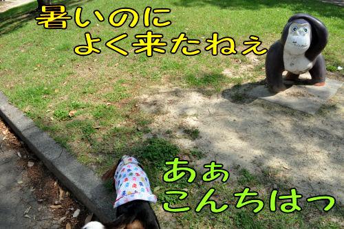 2011060605.jpg