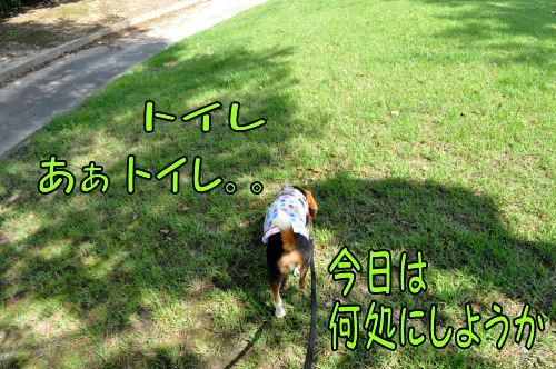 2011060606.jpg
