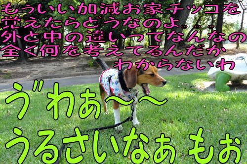 2011060610.jpg