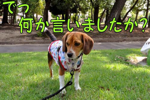 2011060611.jpg