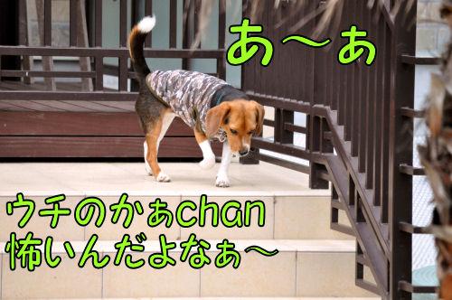 2011060707.jpg