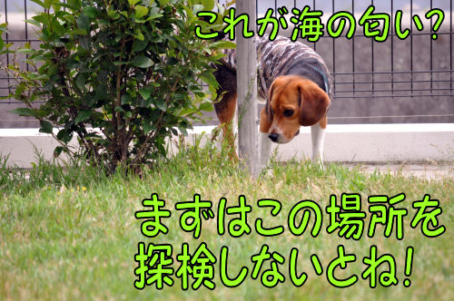 2011060708.jpg