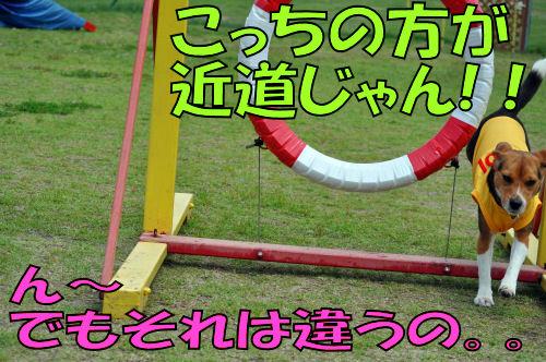 2011060806.jpg
