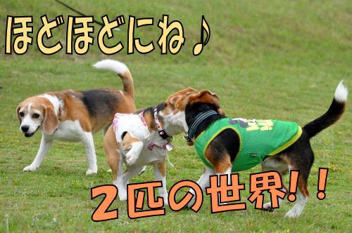 2011061310.jpg