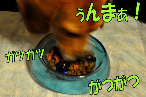 2011071317.jpg