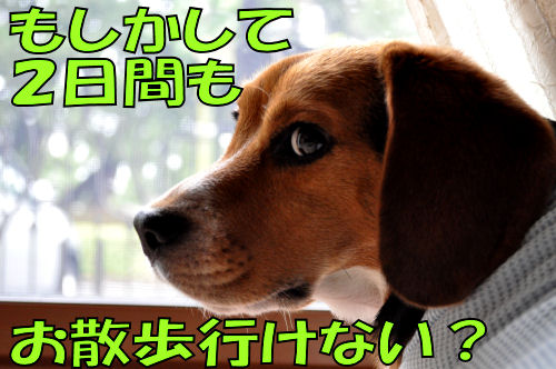 2011071906.jpg