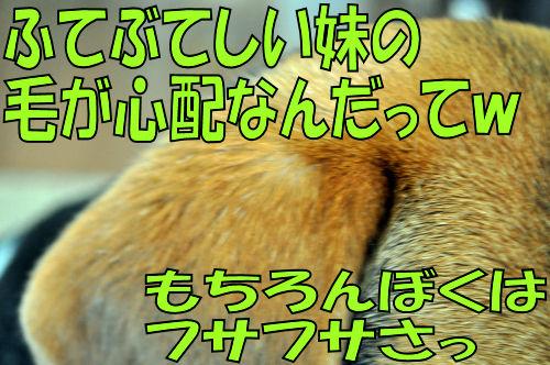 2011090503.jpg