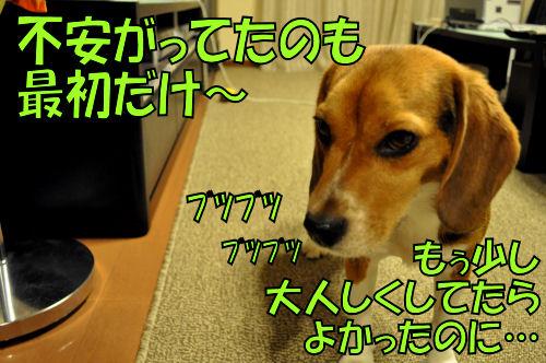 2011091405.jpg