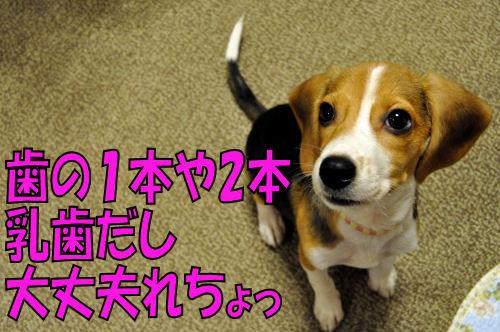 2011101705.jpg