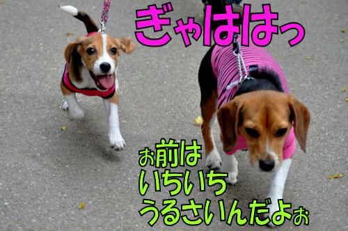 2011110305.jpg